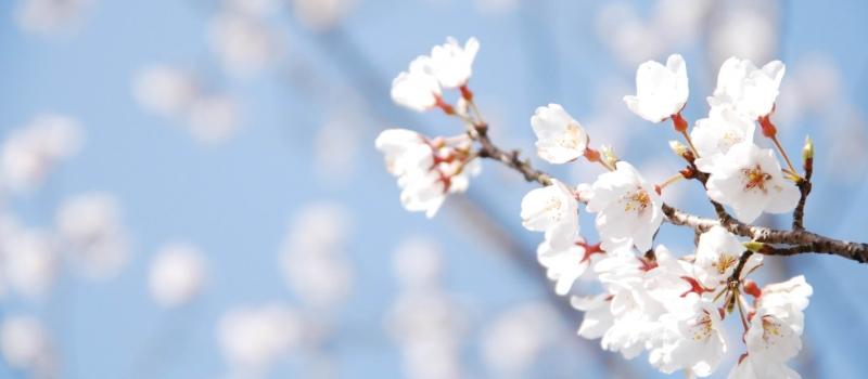 spring-wallpaper-free-desktop